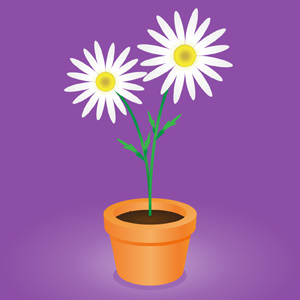 Daisy Flower Pot - Vector illustration of an orange clay flower pot with two lovely white daisies growing out of it.  Simple and pretty! - Orange, Clay, Flower, Pot, Two, Pair, Blooming, White, Daisies, Growing, Out, Pretty, Beautiful, Lovely, Plants, Nature, Botanical, Botany